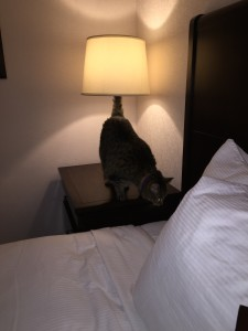 Zigzag in a Sacramento hotel room.